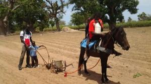 les enfants travaillent aux champs
